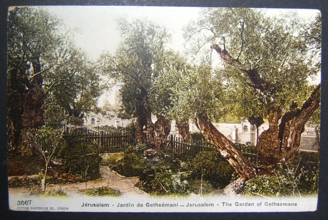 1900s Holyland/Palestine used color picture postcard