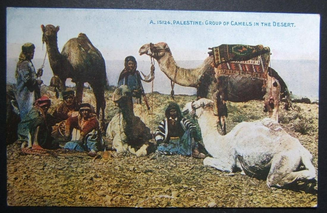 1900s Holyland/Palestine unused color picture postcard