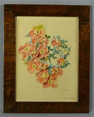 Gruber, Franz Xaver (Attrib.): ''Rosa bicolor''