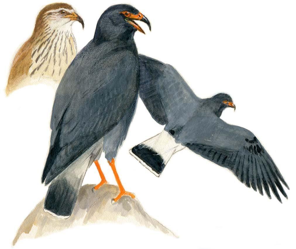 2: Eagle, Head Detail