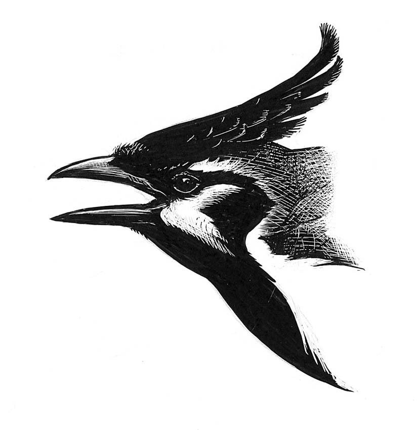 13: Magpie Jay Head, Muscovy Duck, Maps