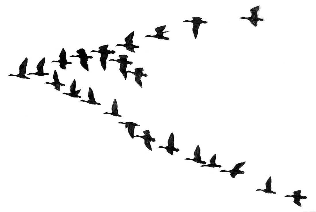 14: Ducks, Geese, Terns, Tail Details