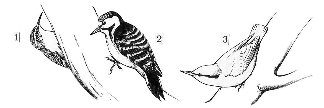 15: Terns, Geese, Robins, Wing Details