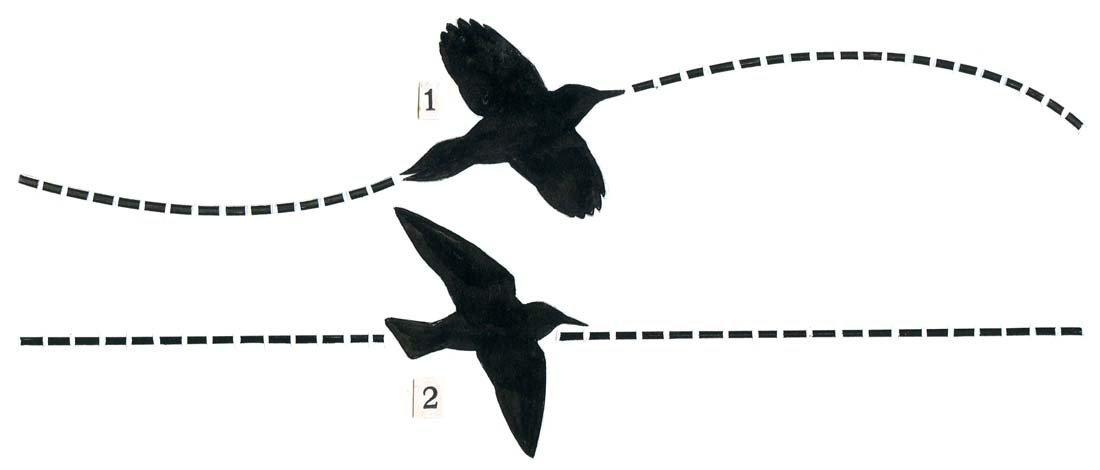 18: Bird Silhouettes