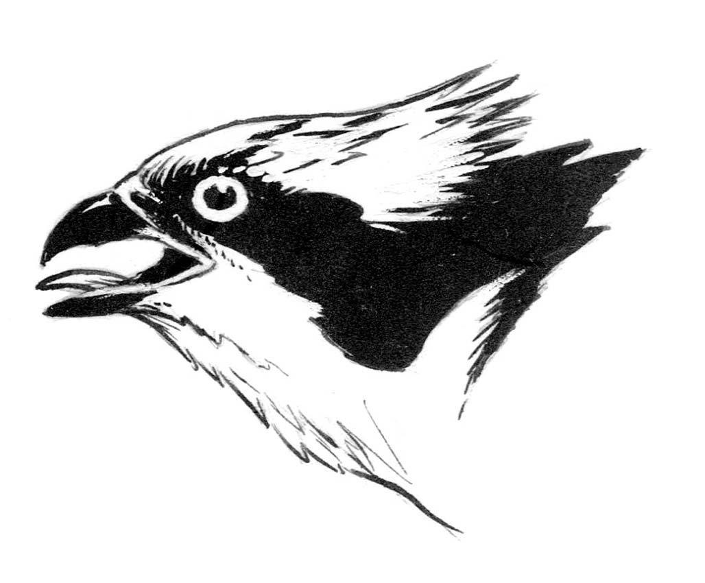 19: Osprey Head, Crow, Warblers, Head Studies