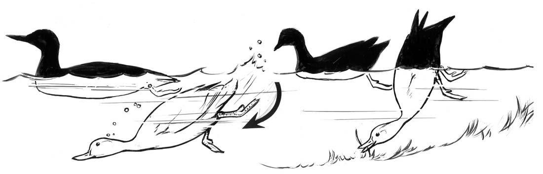 20: Ducks, Nuthatch, Flight Patterns