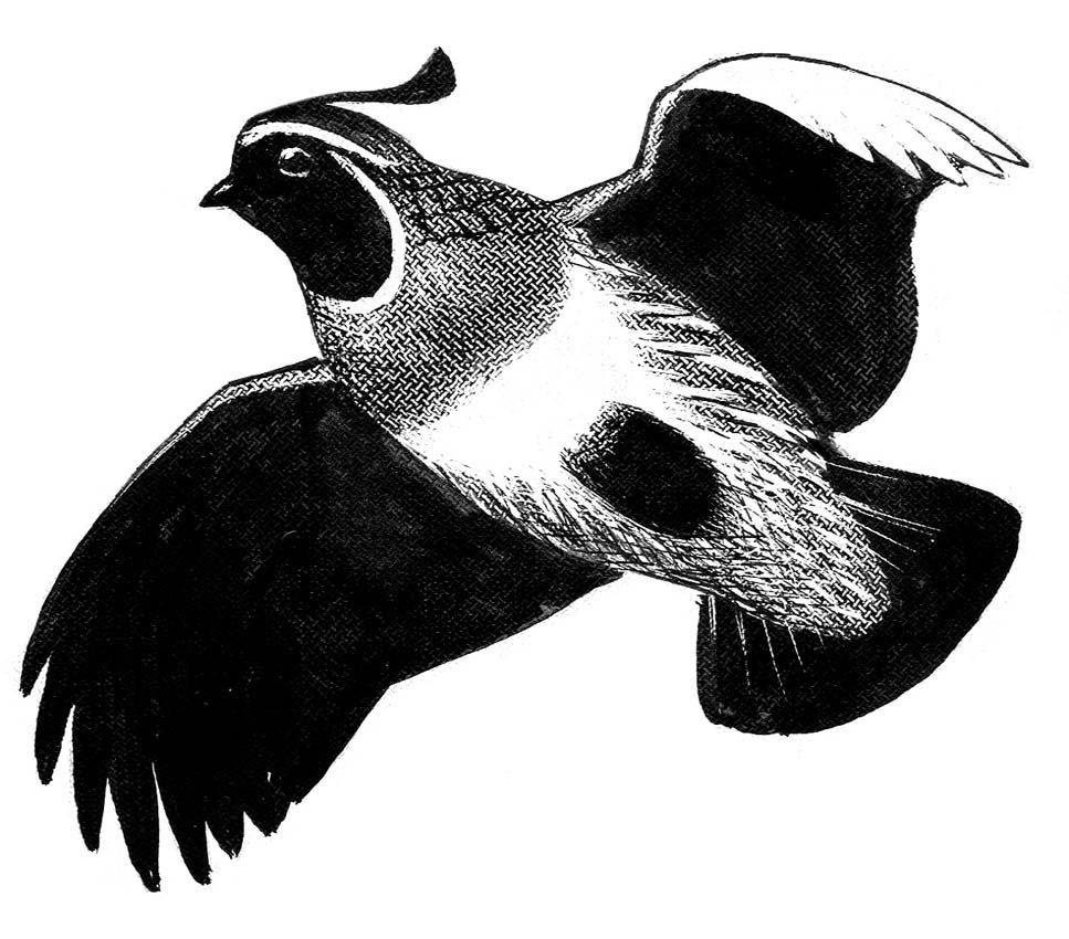 21: Grouse, Raptors, Swallow