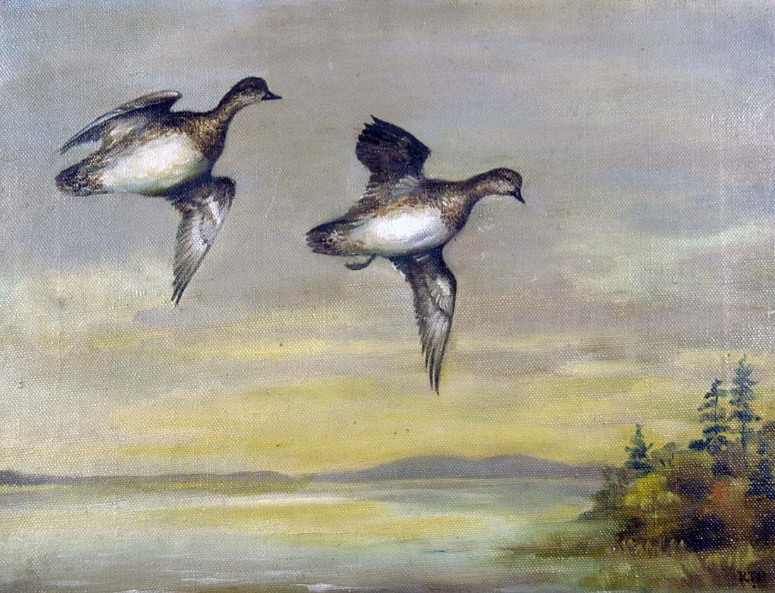 130: Two American Wigeons on the Wing, Roger Tory Peter