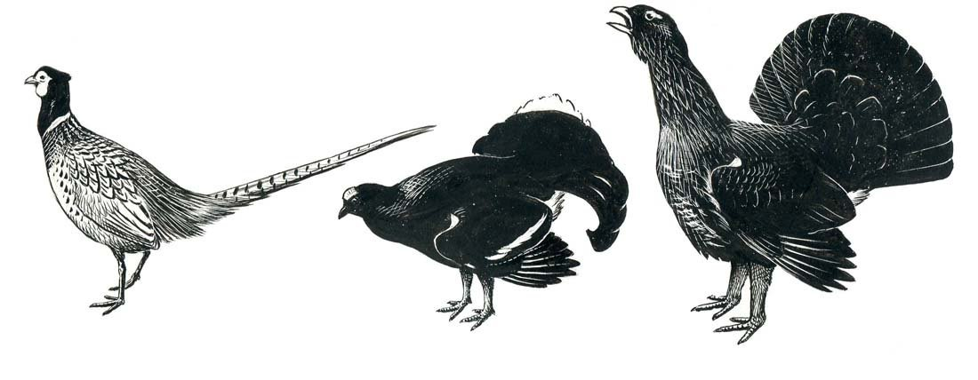13A: Capercaillie, Swallows, Details