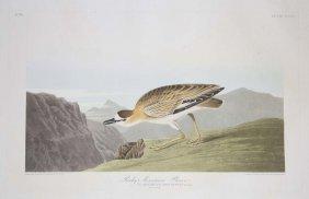 1: John James Audubon, Plate 350: Rocky Mountain Plover