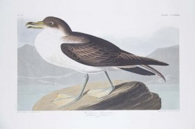 John James Audubon, Plate 283: Lapland Longspur