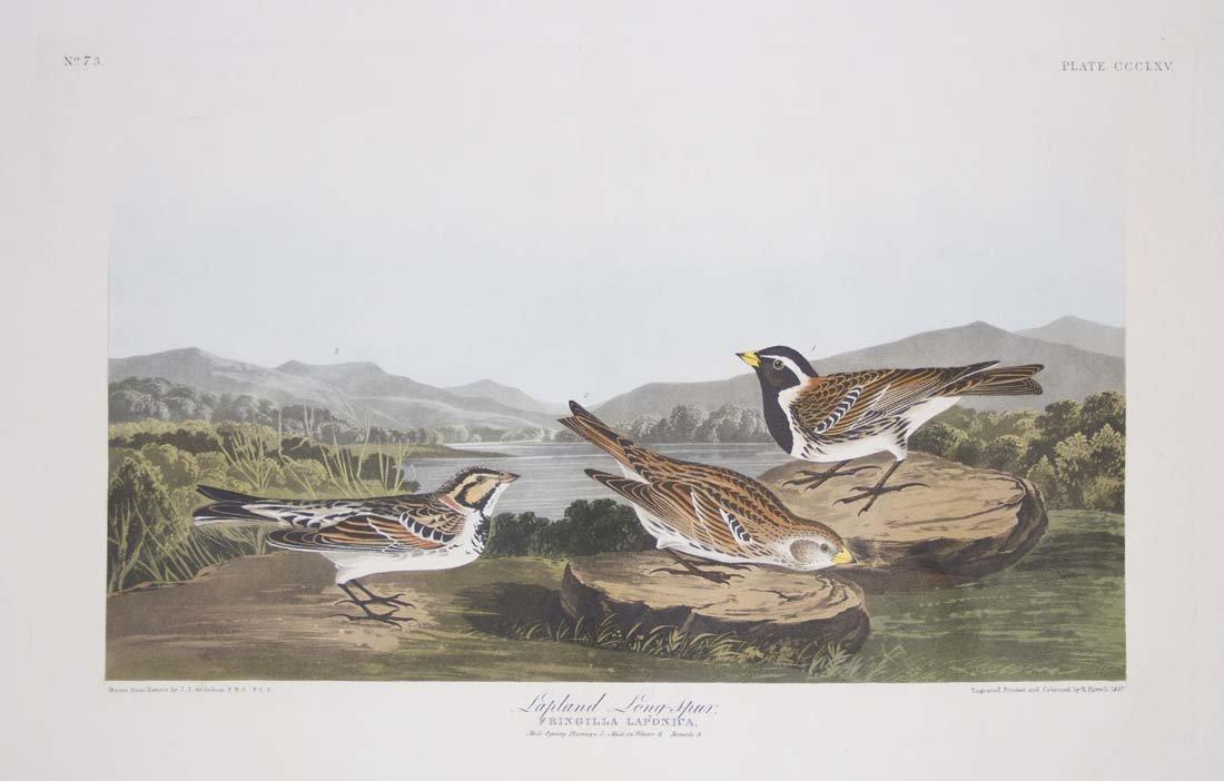 3: John James Audubon, Plate 73: Lapland Longspur