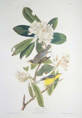 John James Audubon, Plate 103: Canada Warbler