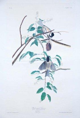 6: John James Audubon, Plate 160: Black-Capped Titmouse