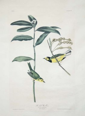 John James Audubon, Plate 110: Hooded Warbler