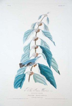 9: John James Audubon, Plate 49: Blue Green Warbler