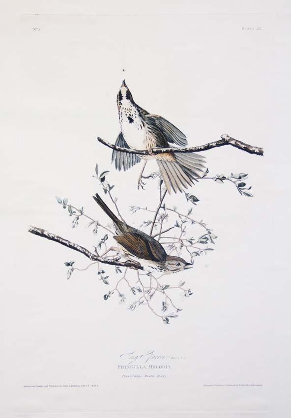 11: John James Audubon, Plate 25: Song Sparrow