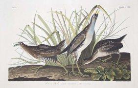 16: John James Audubon, Plate 233: Sora or Rail