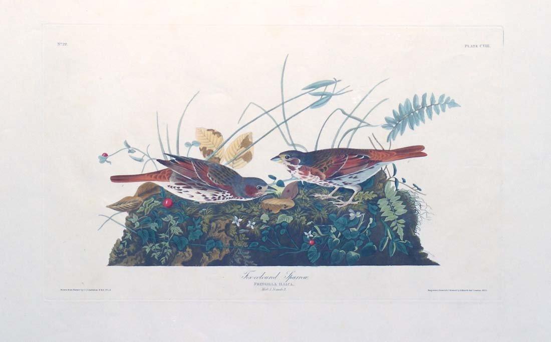 17: John James Audubon, Plate 108: Fox-Colored Sparrow