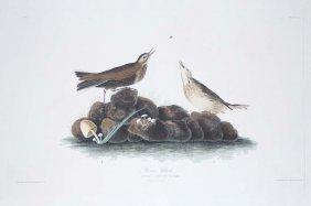 21: John James Audubon, Plate 10: Brown Titlark