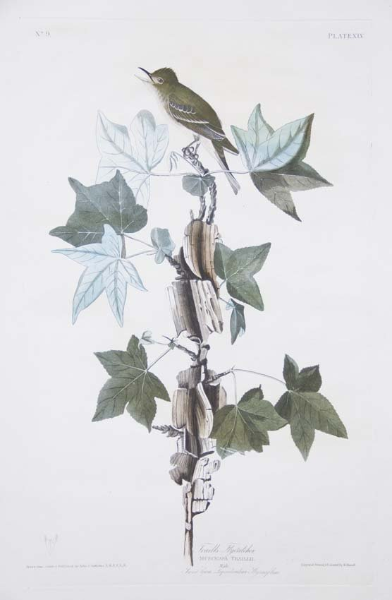 23: John James Audubon, Plate 45: Trail's Flycatcher
