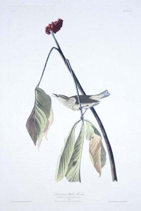 24: John James Audubon, Plate 19: Louisiana Water Thrus