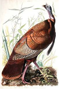 35: John James Audubon, Plate 1: Wild American Turkey C