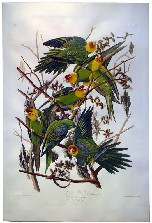 John James Audubon (1785-1851) - Plate 26