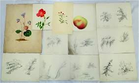 Early 19thc School Bigonia Grandiflora Watercolor