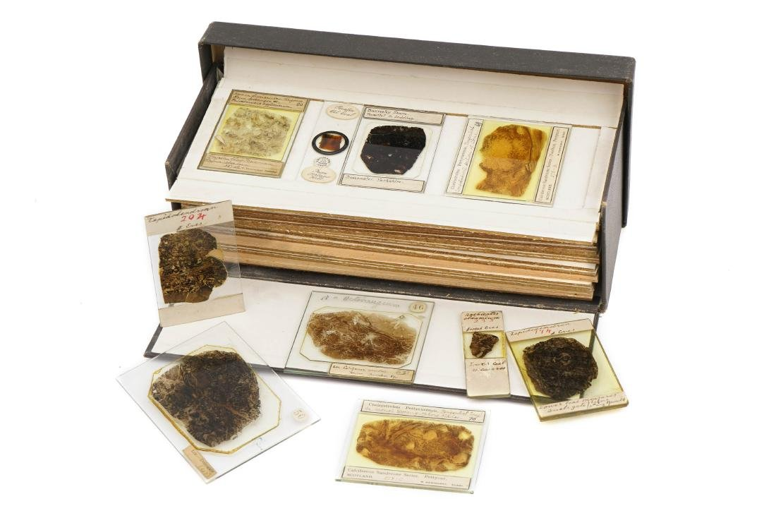 A Large Collection of Coal Fossil Microscope Slides,