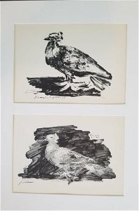 PICASSO- THE PIGEON