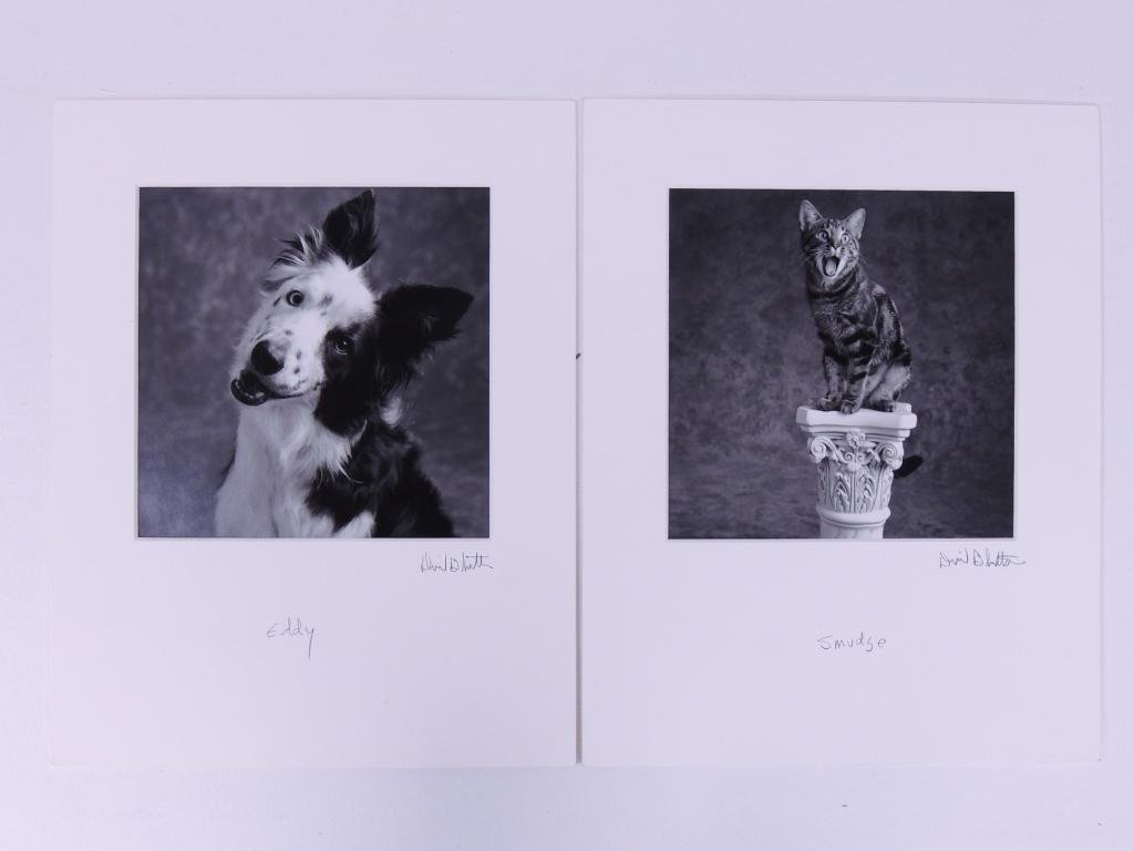 41 Matted Dog & Cat Studio Photos