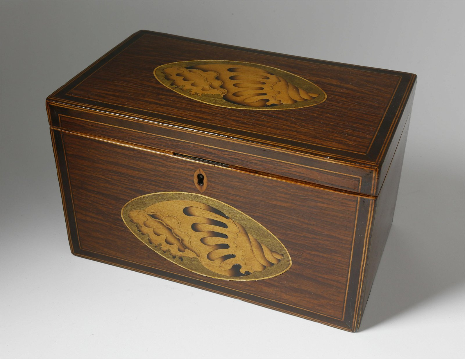 Partridge Wood Satinwood Shell Tea Caddy, 19th Cent.