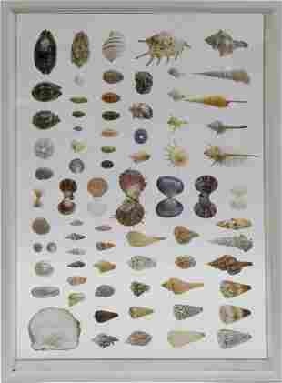 Encased Seashell Specimen Shadowbox, Contemporary