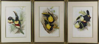 Three Hand Colored Lithographs of Toucans, circa 1854