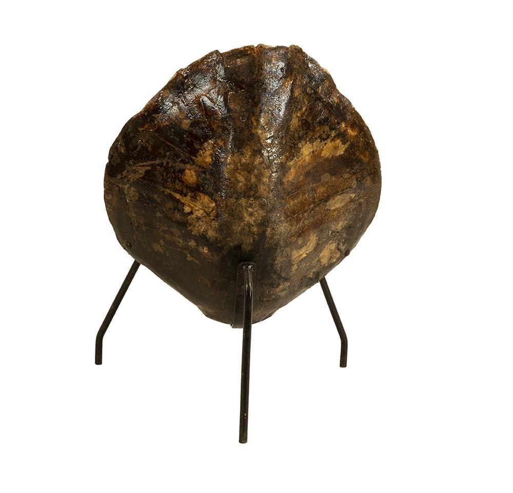 Tortoiseshell Chair