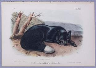 19c JJ Audubon Octavo HC Lithograph American Black Fox