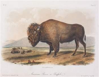 19c JJ Audubon Octavo HC Print American Bison/Buffalo