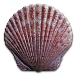 2019 Fiji 10 gram Silver Castaway Colorized Seashell