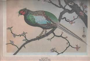angu Benji Asada- Pheasant