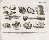 313B Storia naturale  Pluche Noel Antoine Le specta