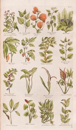 260D: Botanica - Hill, John.  The British Herbal: An Hi