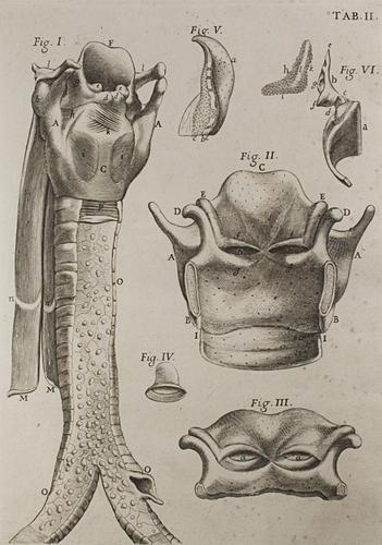 10: Anatomia - Morgagni, Giovanni Battista. Adversaria