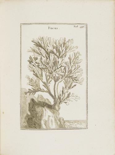 18: Botanica - Tournefort, Joseph Pitton de. Instituti