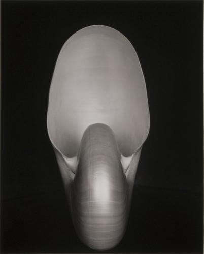 374: Edward Weston (1886 - 1958) Shell, 1927