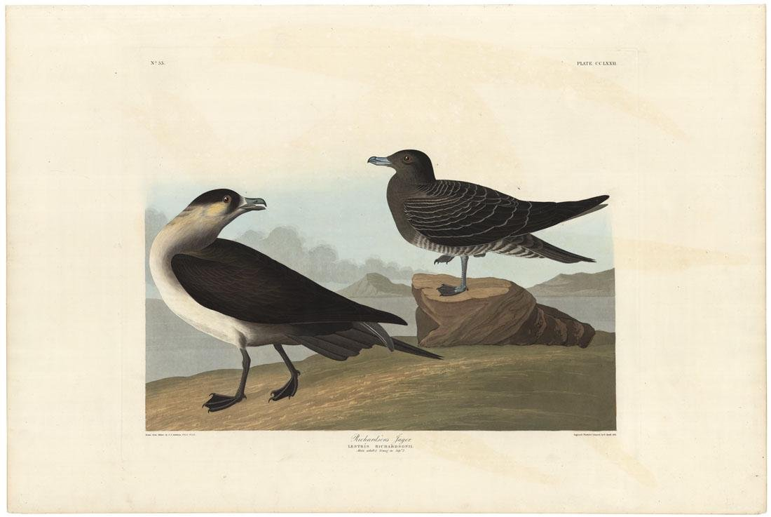 Audubon, Jaeger, Aquatint & engraving, Elephant
