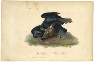 Audubon octavo, Black Vulture. Pl. 3, Litho