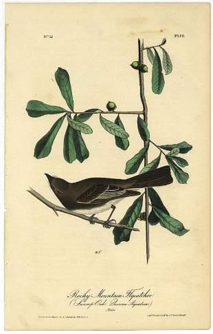 Audubon octavo Rocky Mountain Flycatcher Pl 60
