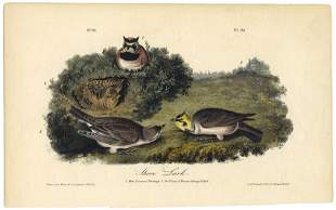 Audubon octavo Shore Lark Pl 151 Litho