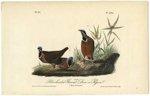 Audubon octavo Ground Dove Pl 284 Litho